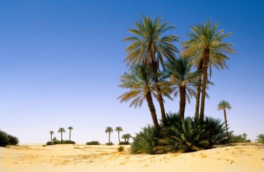 Desert Resort Reunions